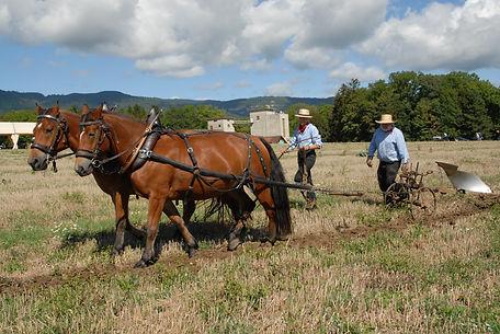 0- moisson chevaux 3.jpg