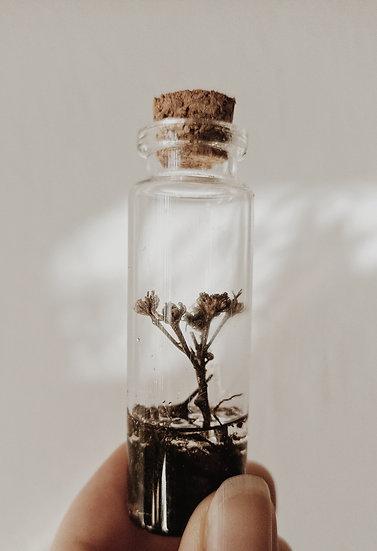 Roślinka w buteleczce 1