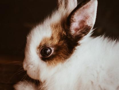 Nononononooo | o królikach