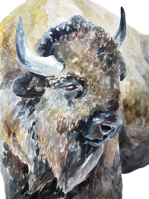 Yellowstone Yearning