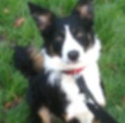 Fetch Bridget Dog
