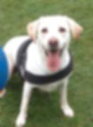 Fetch Amy Dog