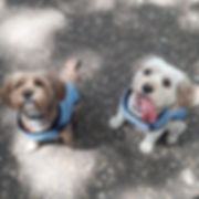Fetch Jasper Ruby Dog