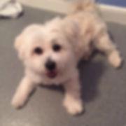 Fetch Louis Dog