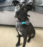 Fetch Bruce Dog