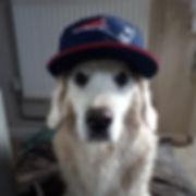 Fetch Bo Dog