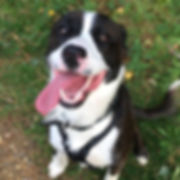Fetch Gordon Dog