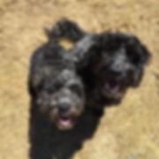 Fetch Nelson Murphy Dog