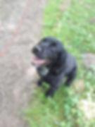 Fetch Remi Dog