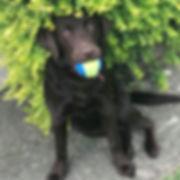 Fetch Dottie Dog