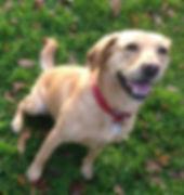 Fetch Lilly Dog