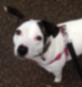 Fetch Millie Dog
