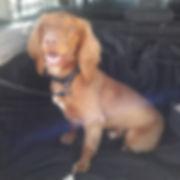 Fetch Harry Dog