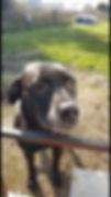 Fetch Missy Dog