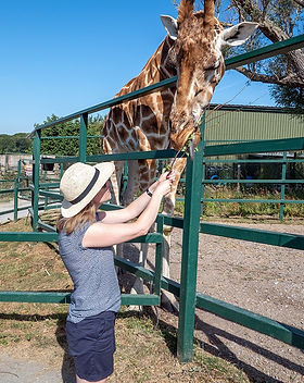 giraffe-feeding_edited.jpg