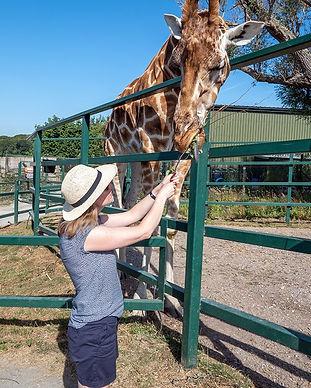giraffe-feeding_edited.jpg