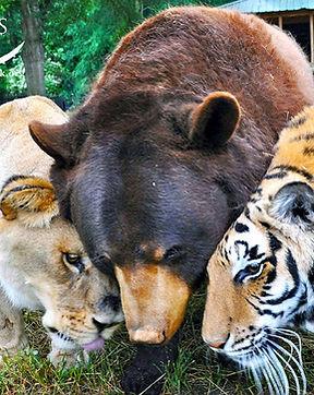 ARK-wildlife-park-exotic-animal-sanctuary.jpg