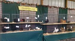 TTPC Champion Row