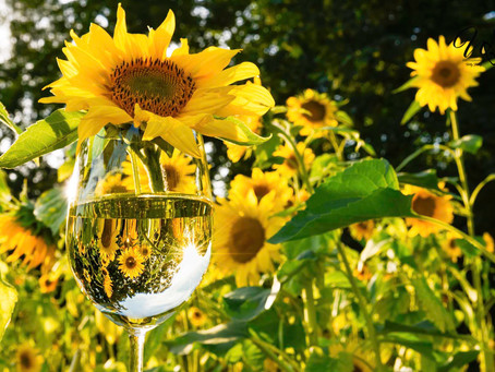 Inspiration from Sunflowers in a Wine Glass