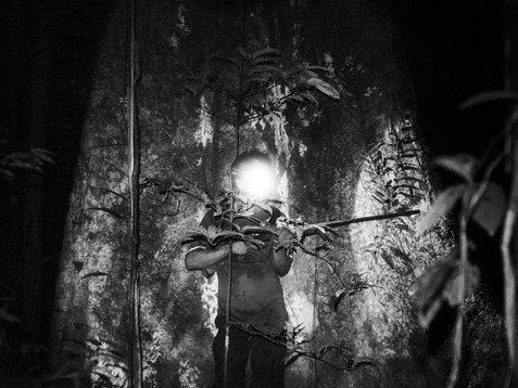 In November, 2017, late at night is the best way to hunt capybara, monkeys, curassow, small crocodile and some other wild animals around the Amazon. Aladino, a native Bora shaman, stands with his shotgun and head flashlight waiting for anything that moves. Often, Aladino has to be at these places in order to provide food for his family, be aware of all the danger that surrounds him and maintain the old native traditions.