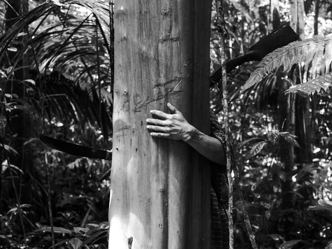 In March, 2018, Aladino, a native Bora shaman, puts his hand around a tree in the so-called Bora Sacred Valley, Amazon region. At the moment, he is in a search for natural medicines around the forest. The tree bark can be used as a curative tea. The tradition is to mark the trees to remember where the medicine came from. During these walks, Aladino also take a chance to hunt as a way of providing to his wife and family.