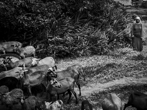 In June, 2015, an Israelite woman directs her herd of sheep through a small hill, in a village called Pebas, in the heart of the Amazon. The Israelites believe that Jesus is alive and the promised land is in Peru for his second time on earth. The religion spread quickly through all Peru, Brazil and Colombia and the followers need to dress exactly like ancient time, not to mention follow religiously the ten commandments. Aladino, a native Bora shaman, needs to face the increase in other religions and the lack of interest in his own culture. He considers them an actual threat and spiritually enemies.