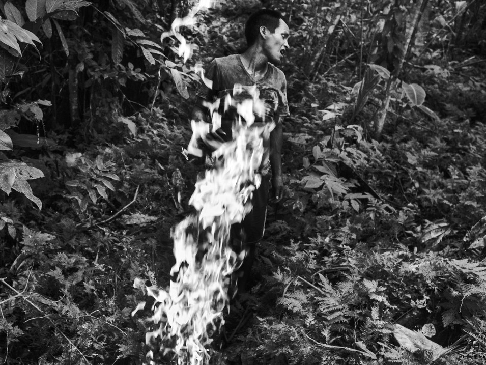"In August, 2016, Aladino, a native Bora shaman, burns a large amount of dry ""cetico"" leaves in a small village of Pebas, located in the heart of the Amazon. The ashes when mixed with coca powder adds perfect flavor in the most important Bora element. The purpose to burn the leaves deep inside the jungle is the belief of being watched by the ancient spirits. Aladino says that the real tradition is to be guided by the spirits in order to achieve the perfect mixture. The coca is the main source for a shaman. It is through the power of the plant where a true indigenous shaman gets all his powers and ancestral knowledge."