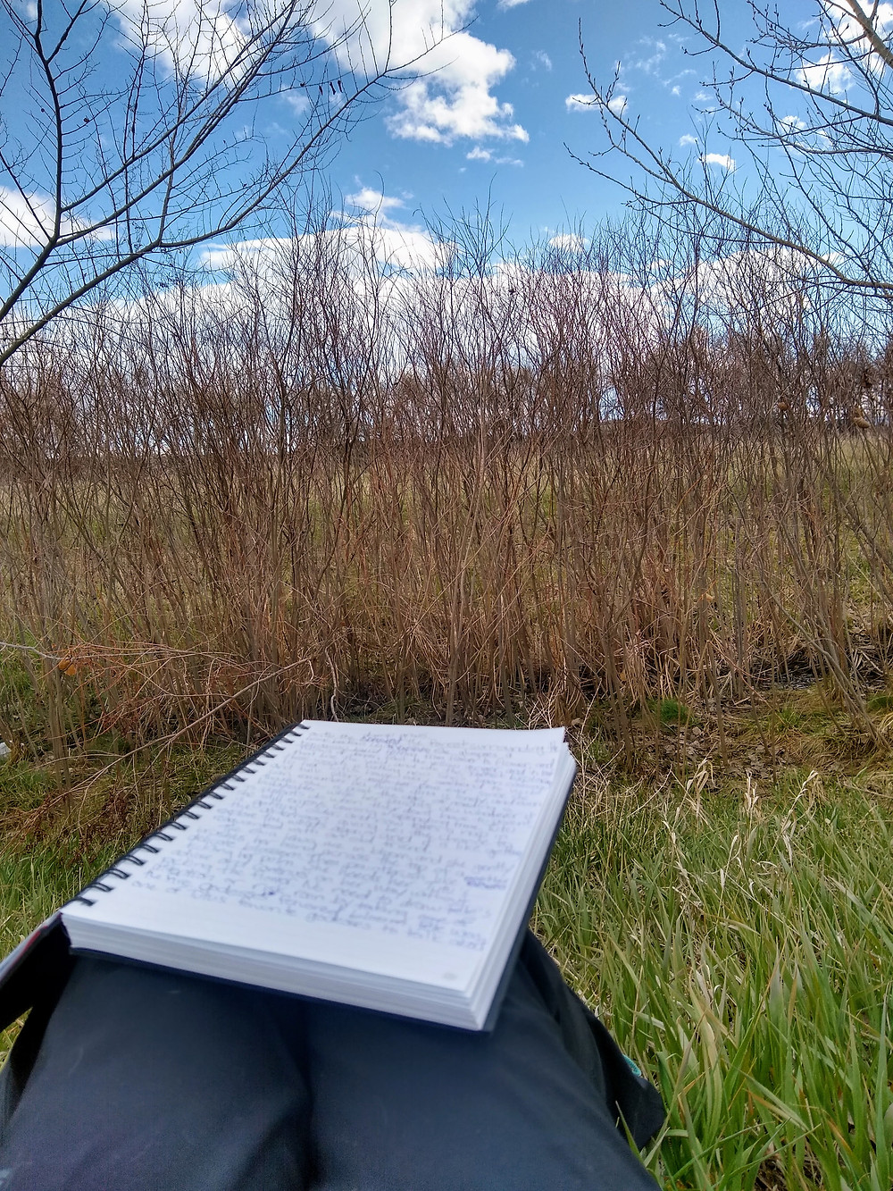 In the open space near some bushes with my writing pad