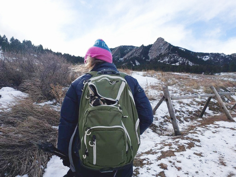 Puppy in a backpack on a hike in front of mountains