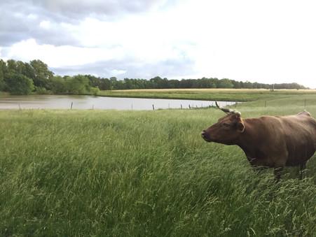 Around the Farm—Home Sweet Home