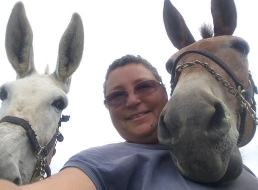 Around the Farm: Stubborn as a Mule