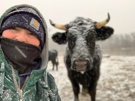 Around the Farm: A Typical Winter Day