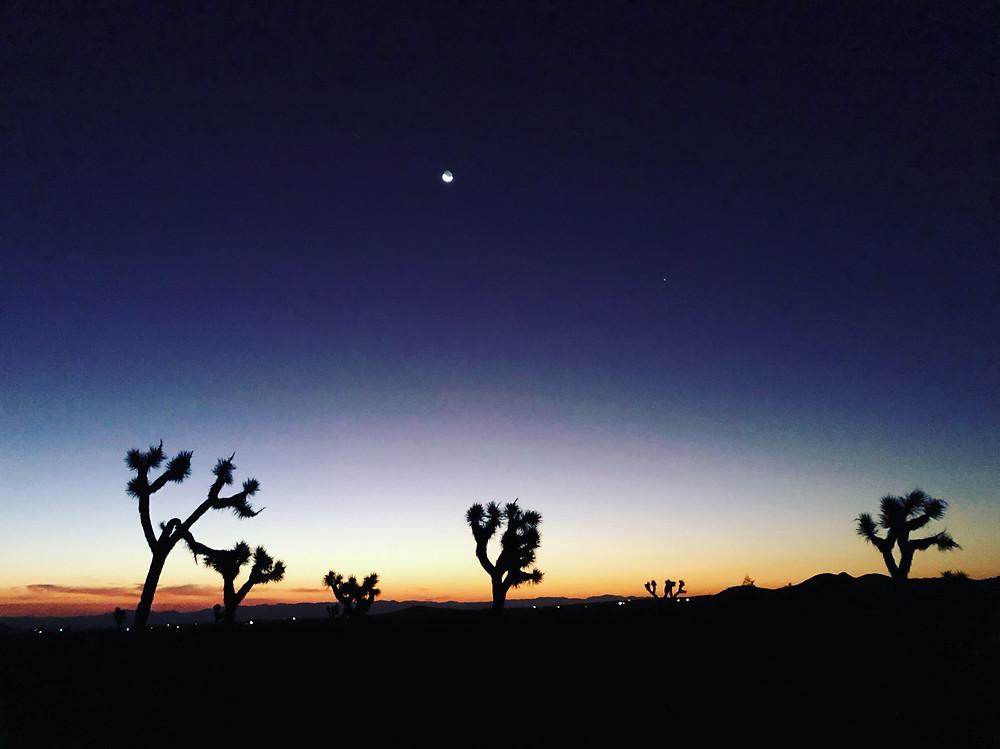 Taroscopes - November