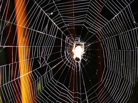 Spider Season in the Hamlet