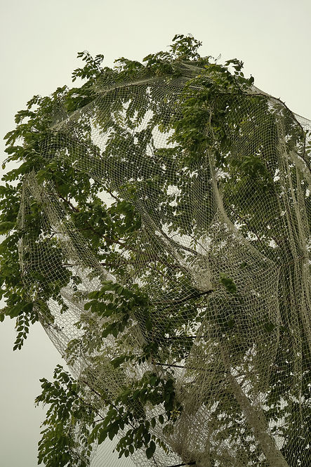 I can't breathe suffocate tree trap net abstract fine art photography