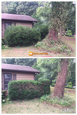 Before & After of yard clean up