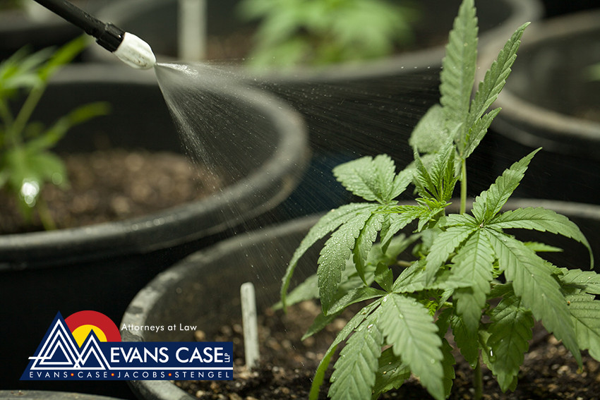 Marijuana and Real Estate: What You Should Know About Buying and Selling Residential Property