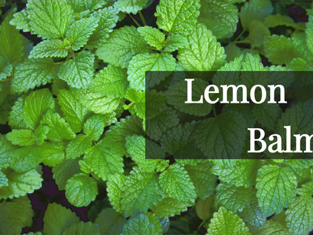 LEMON BALM: BENEFITS AND WHY I LOVE IT