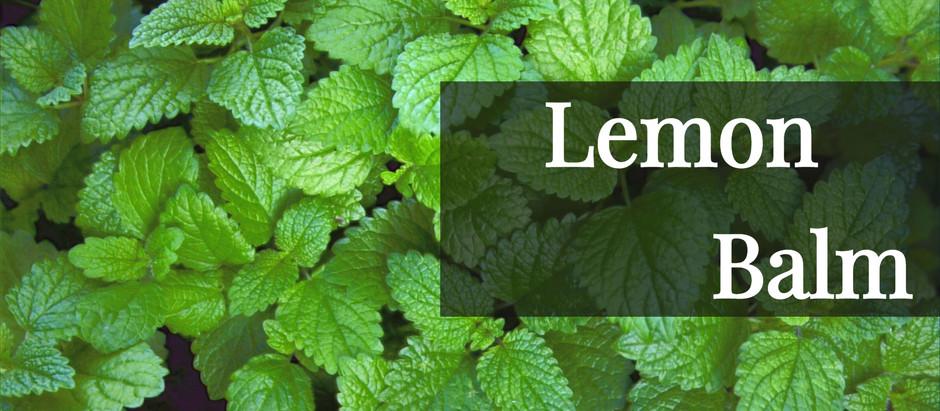 LEMON BALM: BENEFITS AND WHY I LOVE IT
