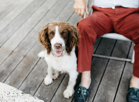 Como fazer o seu cão confiar em si?