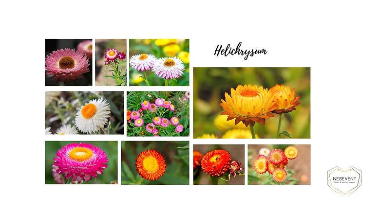 Elichrysum.jpg