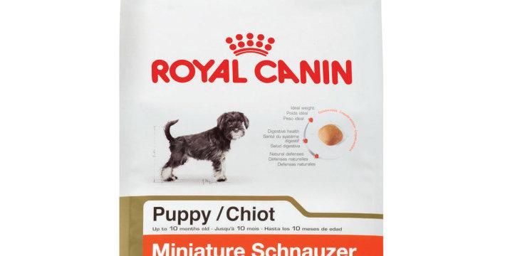 BHN Miniature Schnauzer Puppy