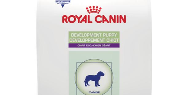 Development Puppy Giant Dog