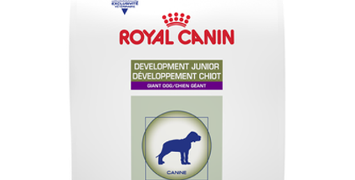 Development Junior Giant Dog