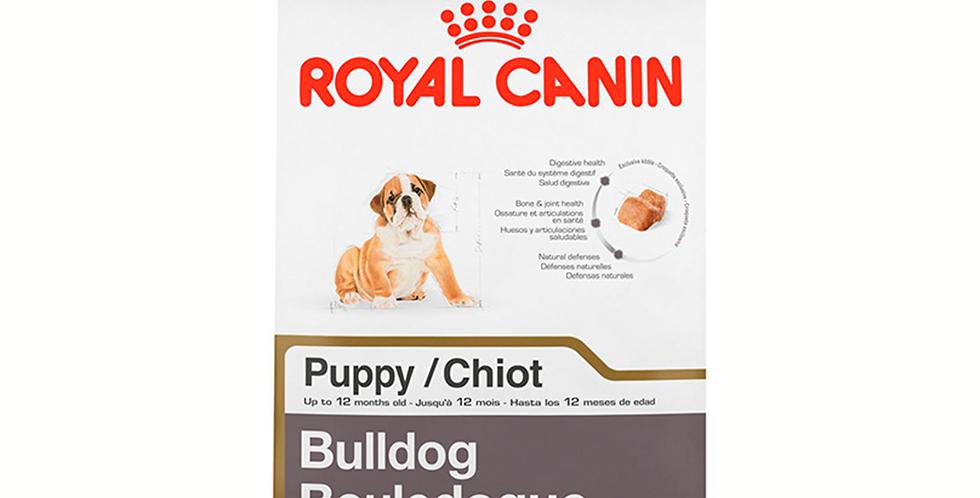 BHN Bulldog Puppy