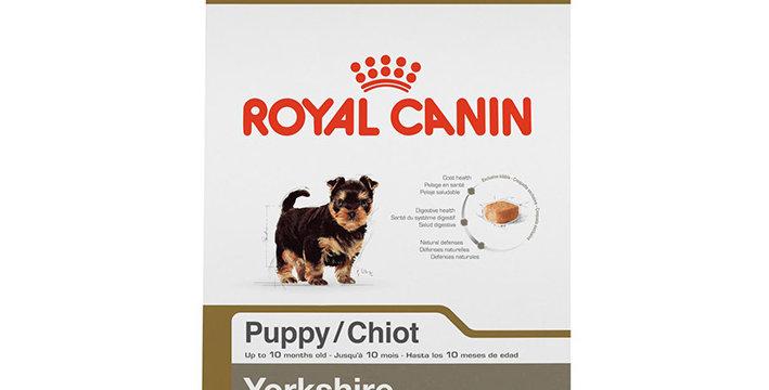 BHN Yorkshire Terrier Puppy