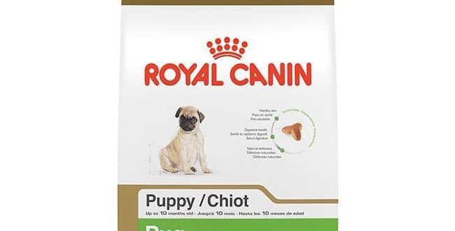 BHN Pug Puppy