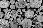 madera carpin.jpg