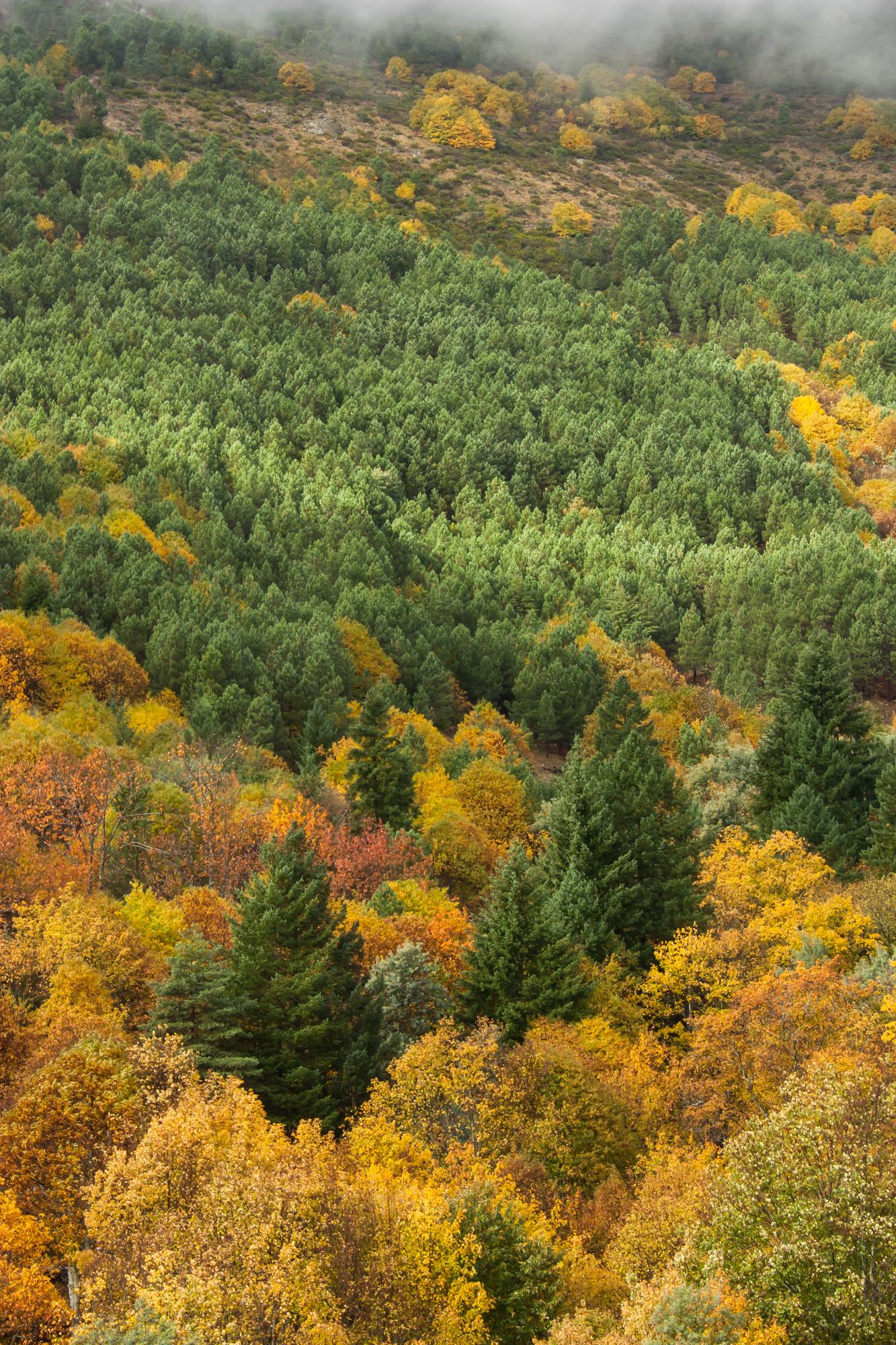 2014-11-15 Outono SE (7)