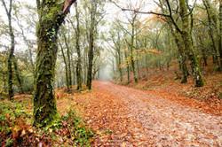 Outono em Corno de Bico